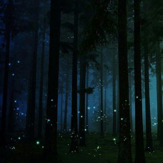 Watch fireflies
