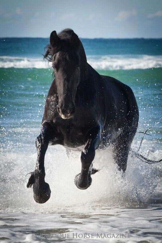Photo taken by Danielle Skerman from Baroque Horse Magazine.  Friesian mare on the beach at Cabrita Qld.