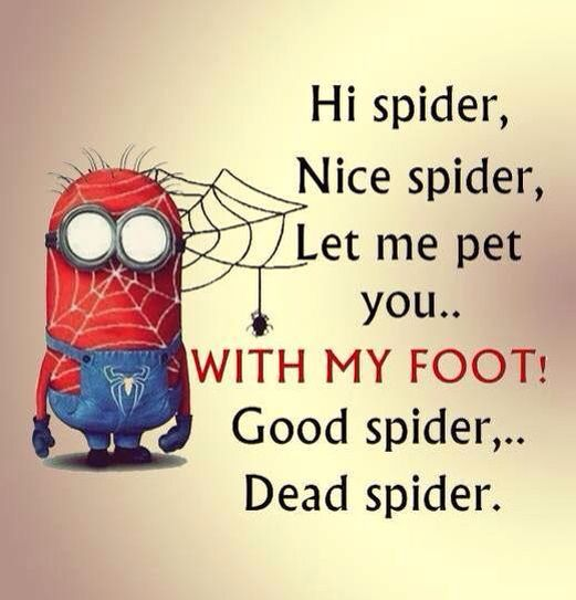Dead spiders are the best spiders!