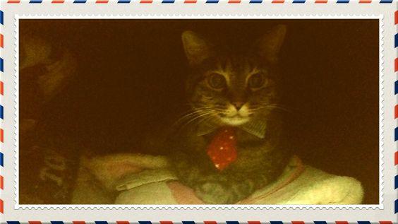 ナナちゃんそこはハンガーラック(ファンシーケース)ですよー見つかりましたかにゃ http://bit.ly/1QQR8aS by @kimiko43118
