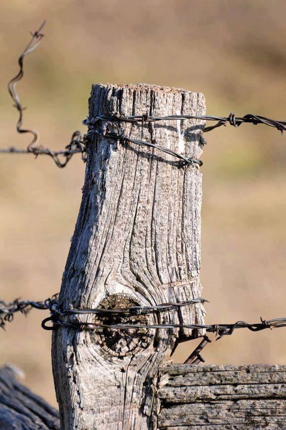 Zmonių Idealas Dievaitis Auksinis Visi Jų Troskimai Prikimsti Pinigine Jausmų Jie Nezino Sirdies Jie Neturi į Old Fences Country Fences Country Scenes