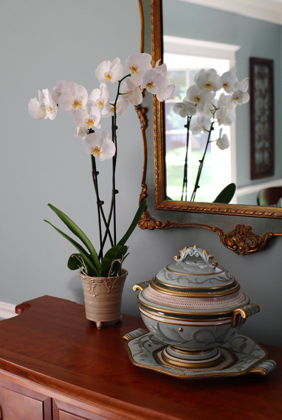 White Orchid in Light Blue Dining Room