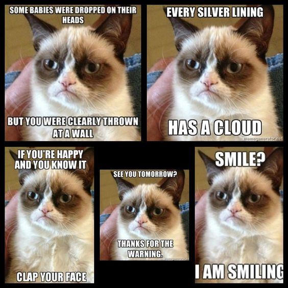 Funny Cat Sayings Quotes: Grumpy Cat, Grumpy Cat Quotes And Cats On Pinterest