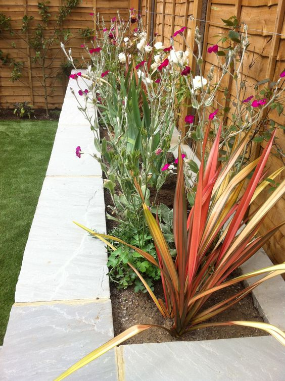 Green Patrol: On Site We finished this garden in Kensal Rise last week. The clients wanted a child-friendly garden which couldn't be ruined by a game of football. On our advice their builders installed high-quality astroturf, paving and elegant raised beds. The inspiration for the planting came from cherry blossom worship in Japan. This garden is all about big blousy blooms and plants whose massed blossom is overwhelmingly striking. We're planted the climbing version of Rosa &lsq...:
