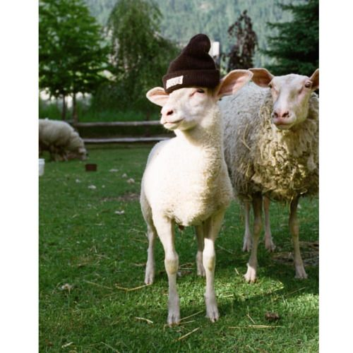 #lamb #sheep #hat Rebellious daughter and concerned mother for @polerstuff