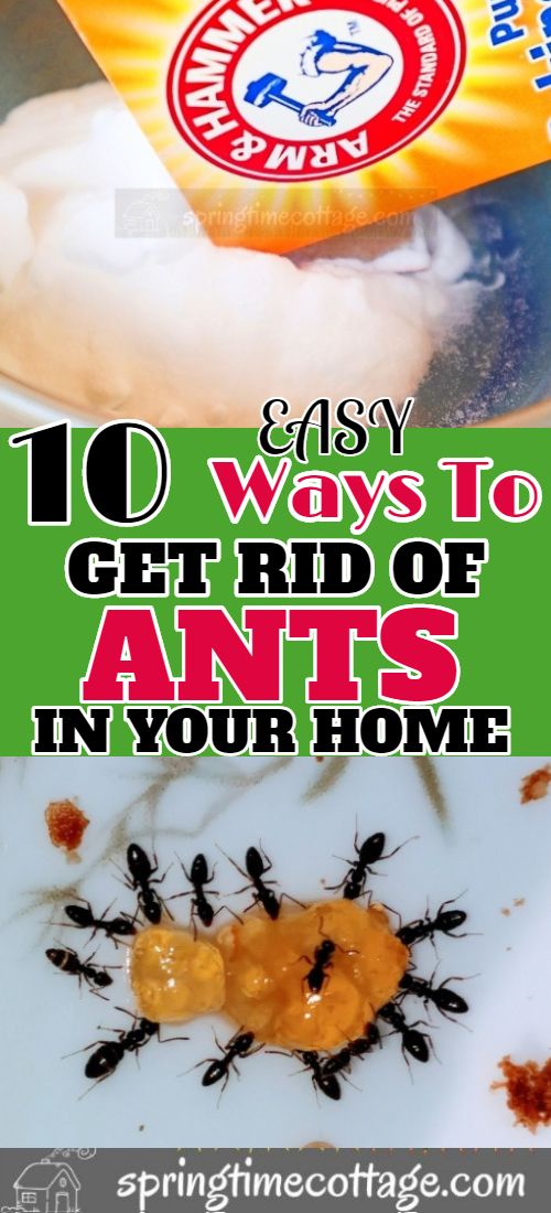 10 Ways To Get Rid Of Ants Naturally Get Rid Of Ants Rid Of Ants Ants
