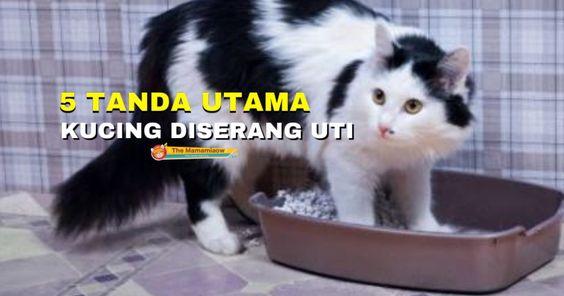 5 Tanda Utama Kucing Anda Mempunyai Masalah Saluran Urinari