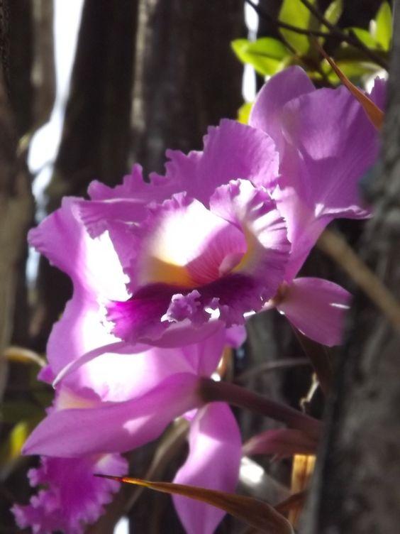 Flores no jardim 2