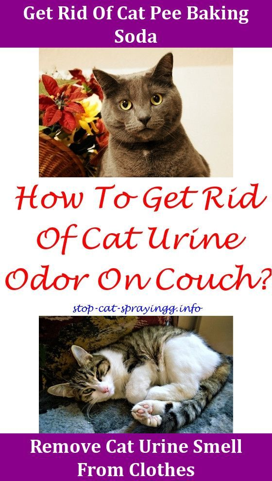 Cat Pee Out Of Carpet Home Remedies Cat Pee Kitty Cat Smells Of Urine What Neutralizes Cat Urine Cat Pee Out Of Mattress Pet Cat Spray Cat Urine Cat Pee Smell