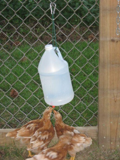 Diy Vinegar Bottle Chicken Waterer Chicken Waterer Homemade Chicken Waterer Chicken Feeders