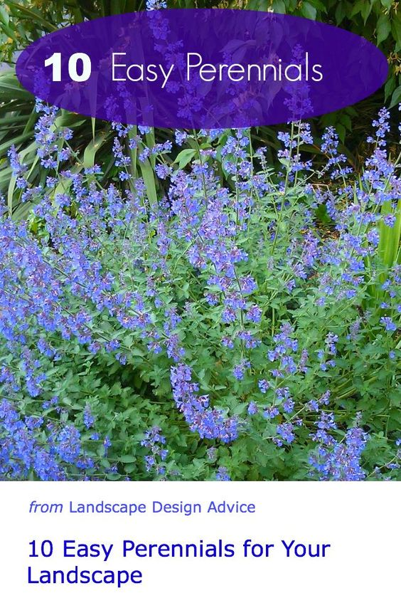 Easy to grow flowers gardens awesome and perennials for Easy maintenance perennials