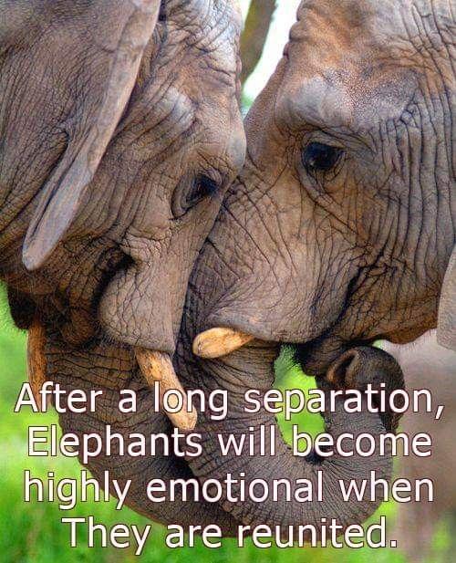 Pin Von Bianca Auf Elefanten Elefanten