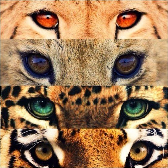 fierce animals - Google Search