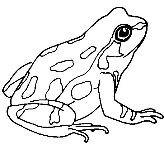 Clip Art Of A Toad Frog Clip Art Black And White Frog Clipart Gif Frog Coloring Pages Art Frog Drawing