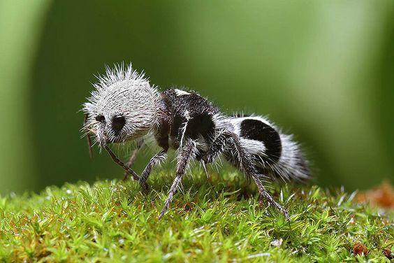 Les 34 espèces animales les plus étranges de la planète, notre monde est incroyable