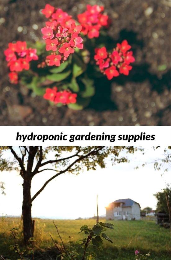 Hydroponic Gardening Supplies 343 20180915173719 53 Gardening Groups Near Me Walmart Companion Gardening Hydroponics Small Garden Layout Garden Parasols
