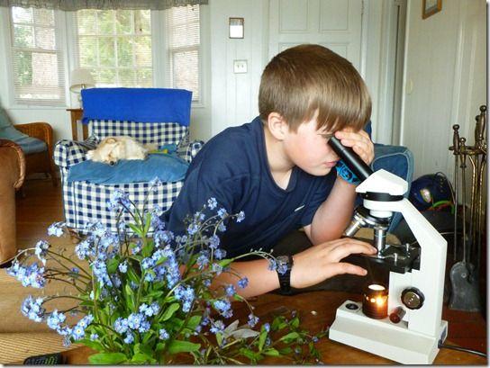 Outdoor Hour Challenge, Spring Wildflower Study