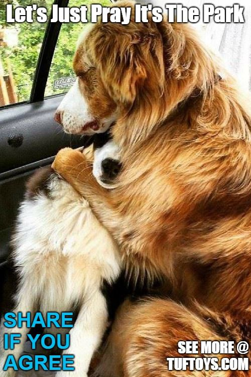 Funny Dog Memes Part 3 Funny Dog Memes Dog Memes Funny Dogs