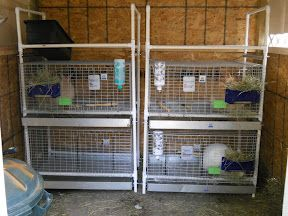 Fr hlingskabine micro farm diy rabbit cage rack for How to make a rabbit hutch from scratch
