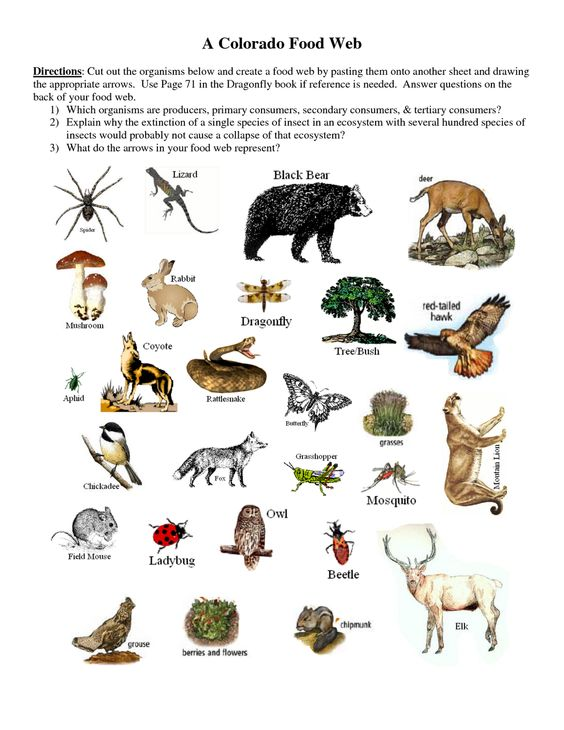 Producers+Consumers+and+Decomposers+Worksheet | Producers+ ...