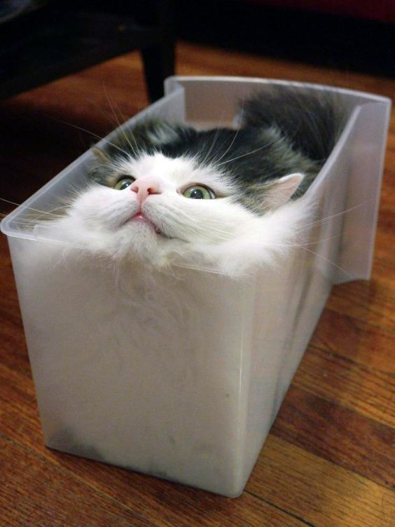 Liquid Cats That Take Shape Of Their Containers In 2020 Funny Animal Photos Cats Funny Animals