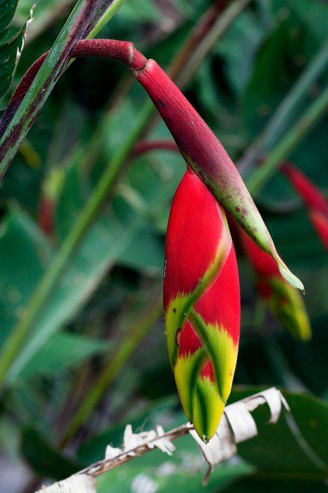 A chacara onde fica a sede da Orientavida tem plantas lindas, flores encantadoras, alem de deliciosas jabuticabeiras