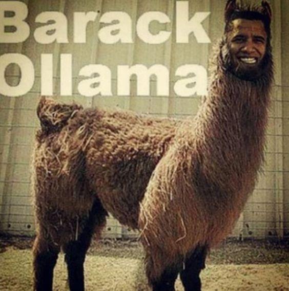 Best 25 Baby Llama Ideas On Pinterest: Barack Ollama
