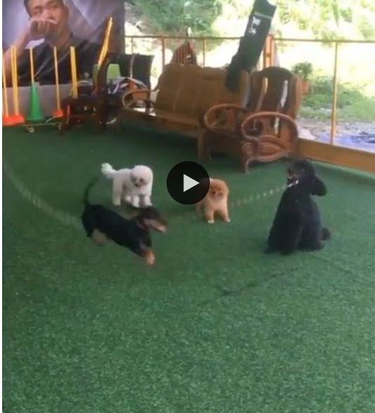 Veja como esses cachorrinhos se divertem pulando corda