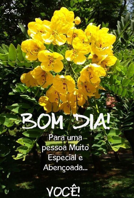 Lindas Flores amarelas.