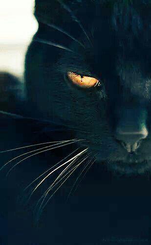 Noir c'est noir !!