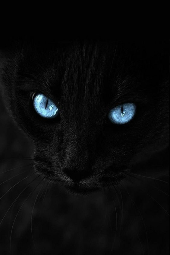 Pin By Karma On Cats Cat Wallpaper Beautiful Cats Cat With Blue Eyes Cool cat eyes wallpaper