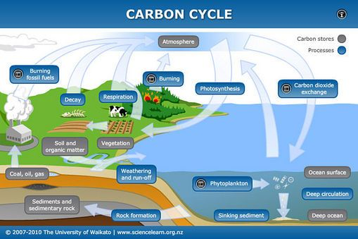 Interactive carbon cycle
