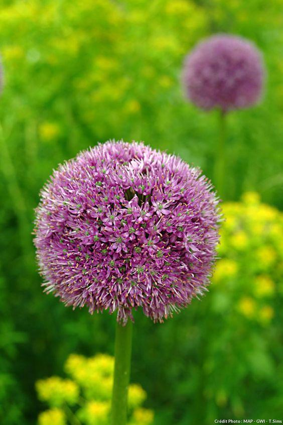 10 plantes faciles qui résistent au manque d'eau (partie 2)