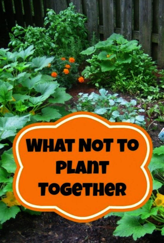 Garden Landscaping Ideas Malaysia Another Gardening Transplanting