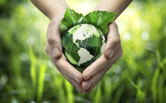 Selo verde garante compra de produto ecologicamente amigável