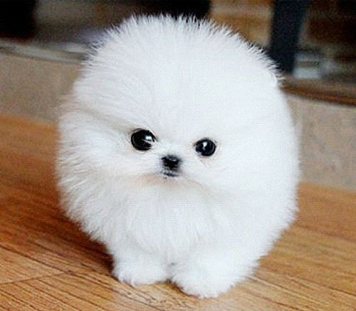 What is this? What ever it is, it's adorable. Awwwww. :3: