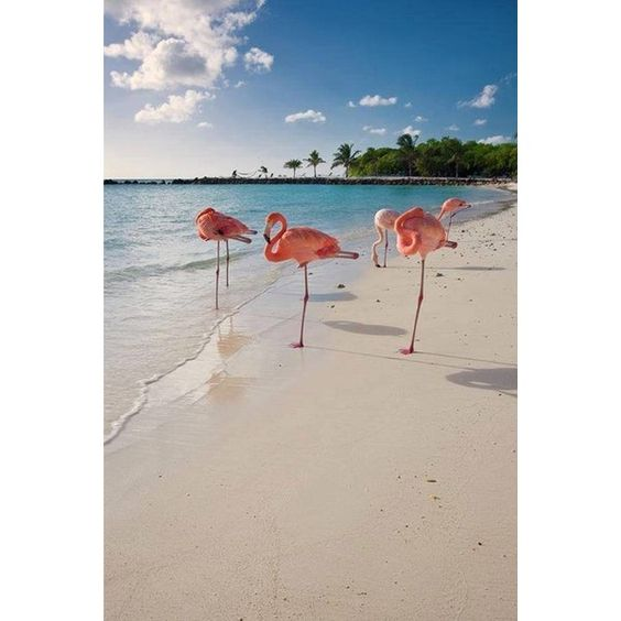 Caribbean Beach With Pink Flamingos ❤ liked on Polyvore featuring home, home decor, wall art, pink flamingo wall art, beach scene wall art, pink home decor, photo poster and beach poster