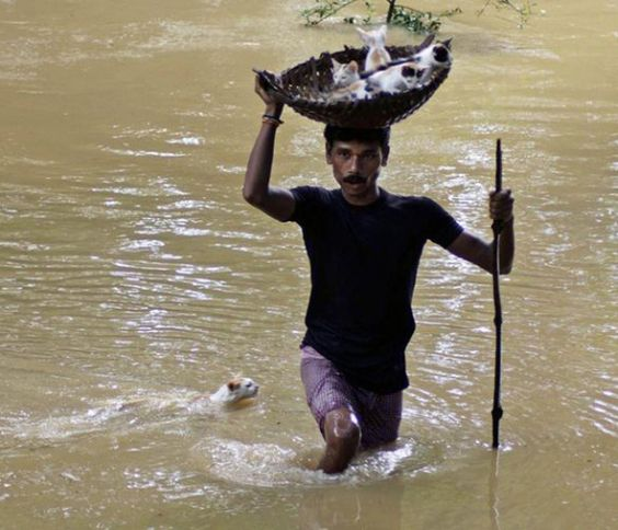 Carrying stranded kittens to dry land during floods in Cuttack City, India. =X
