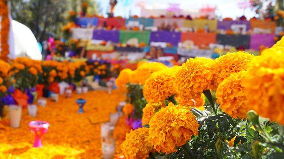 """""""cempōhualxōchitl"""" significa """"veinte flores"""""""