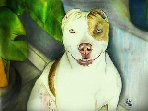 Encomenda.  Suíça.  Pitbull em lápis de cor.  Tamanho A4.
