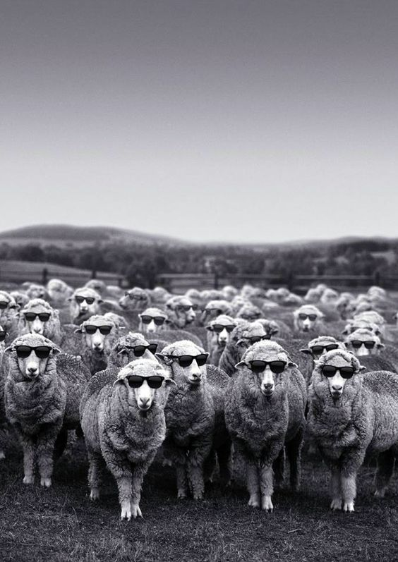 Sheeps group picture #group #funny - Carefully selected by GORGONIA www.gorgonia.it Evitare impecorimento