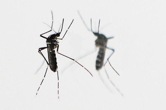 C'est un petit désagrément des vacances : les piqûres d'insectes. L'été, saison de tous les dangers, avec ces guêpes qui vous tournent autour, les frelons menaçant ou encore certaines fourmis rouges. Alors, quelles sont les piqûres les plus douloureuses et surtout, comment les soigner? Un