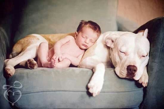 ...ohhh so sweet ..this is my future with pitbulls and babies ;)
