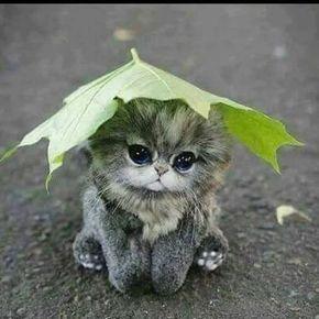 Pretty Kitty #ad