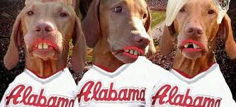 Funny !! Dogs dressed as Alabama Cheerleaders !!