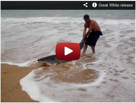 Guy saves a Shark! Watch here:  http://gdurl.tk/4M