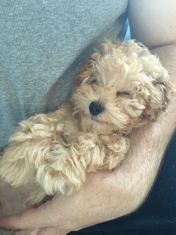14 week old puppy