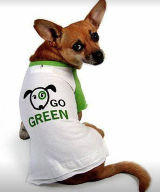 Even your pet wants you to go green! Head to our site for unique, affordable, and eco-friendly products for you pets.