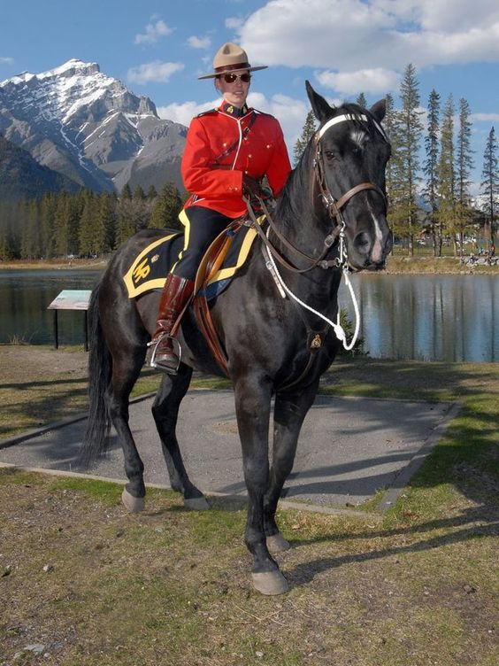 a look at the royal canadian mounted police King of the royal mounted is a great action continuity from the golden age of the adventure comic strip the series was about dave king, sergeant in the royal canadian mounted police.