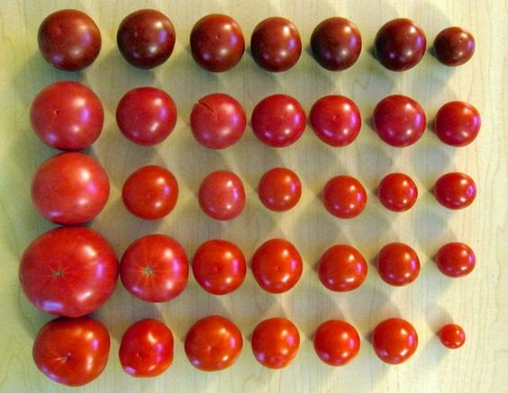catalog shopping? think like a seed breeder, says joseph tychonievich